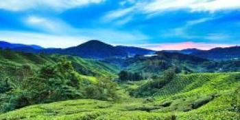 Cameron Highlands,Malaysia
