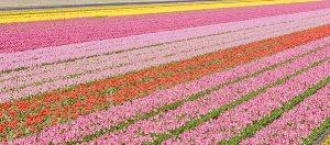Noordwijk,The Netherlands